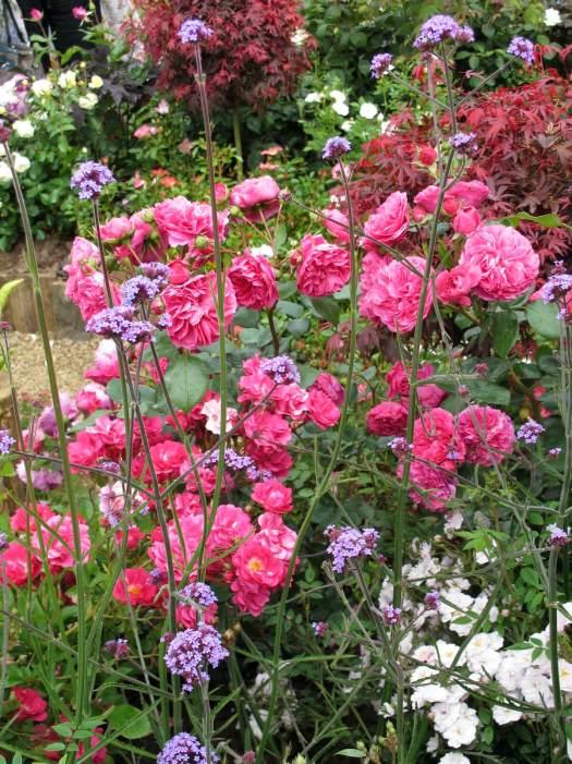 Roses with verbena bonariensis